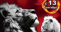 Белые львы Африки шоу