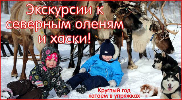 Экскурсия к северным оленям и ездовым собакам, хаски!